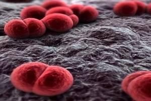 Сезон гриппа и ОРВИ провоцирует рост менингококковой инфекции
