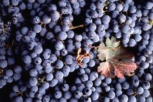 Красное вино способно победить депрессию